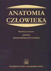 Anatomia cz�owieka